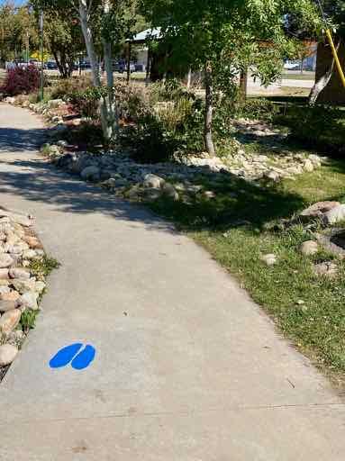 Moose tracks along sidewalk